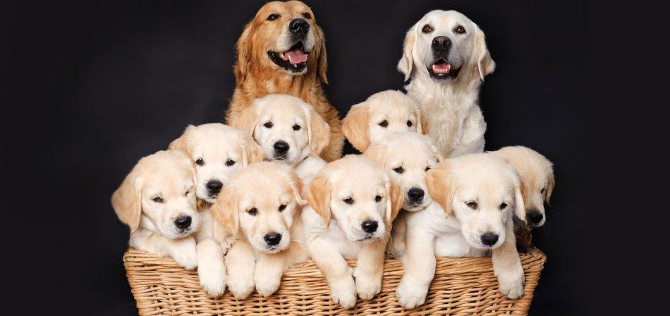 Эпигенетика и проблемы поведения собак фото