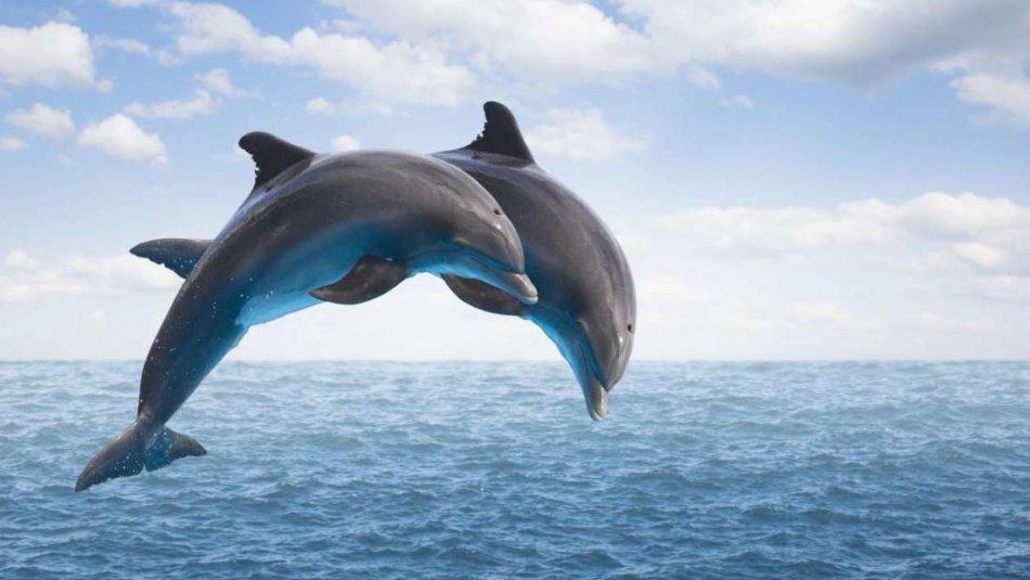 Дельфины прыгают в море фото