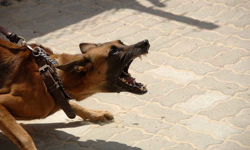 Собака нападает фото