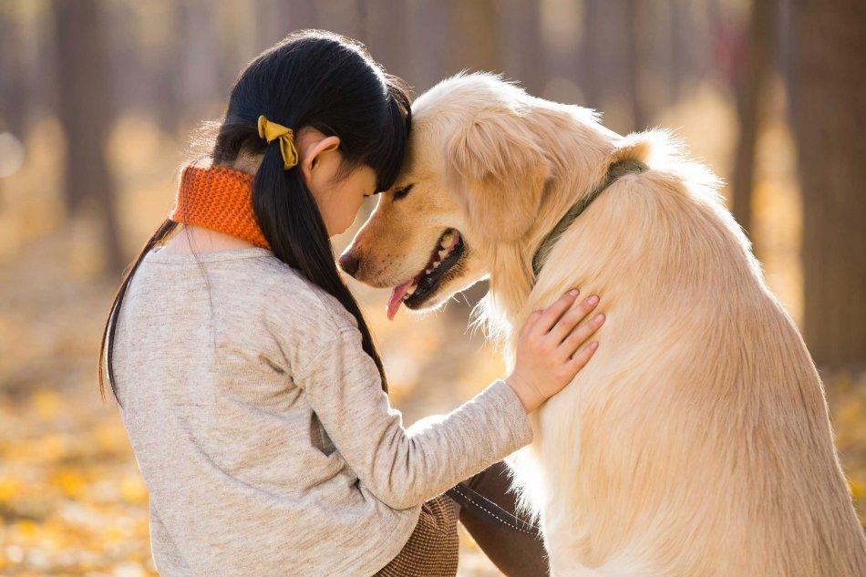 Собака общается с человеком фото