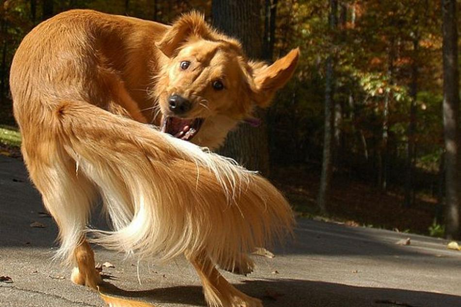 Навязчивая двигательная стереотипия у собак фото