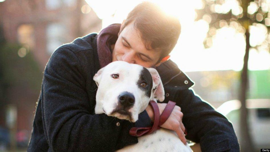 Любовь к животным фото