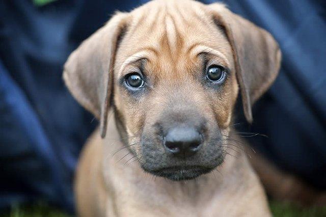 Грустный щенок фото