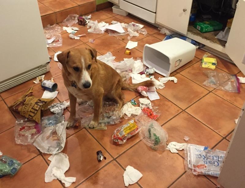 Как мы учим собак плохому фото