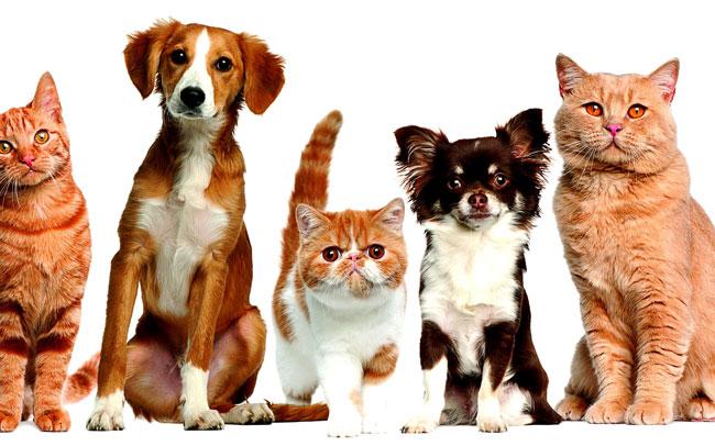Животные в приюте фото