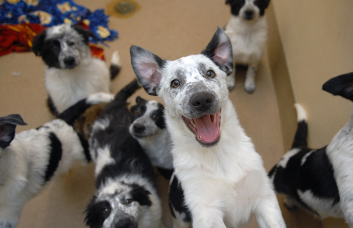 Собаки в приюте фото
