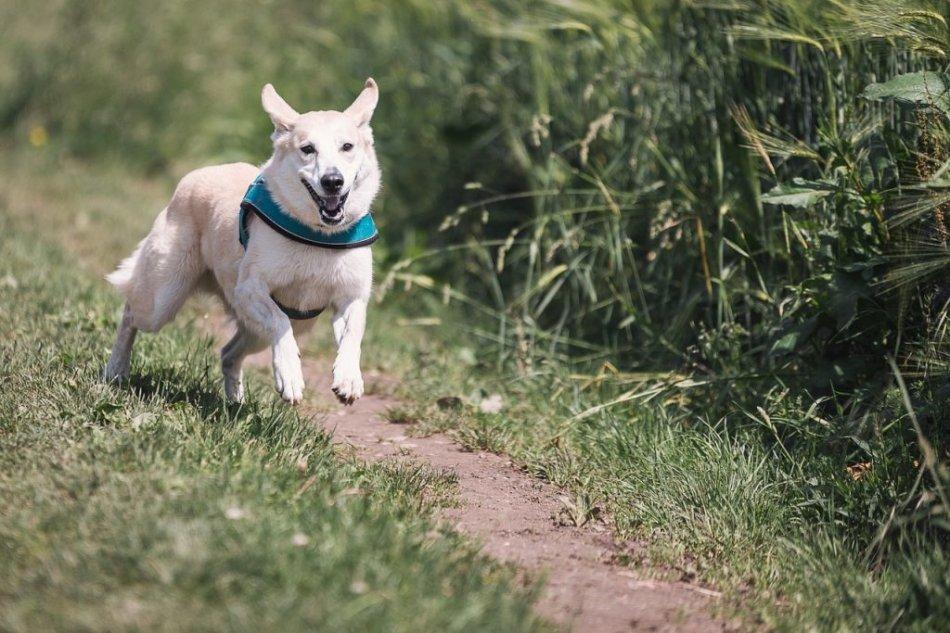 Собака бежит по тропинке фото