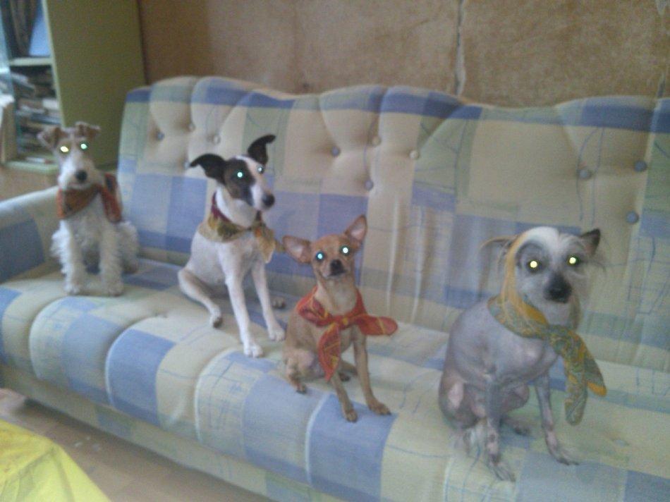 Четыре собаки в одном доме фото