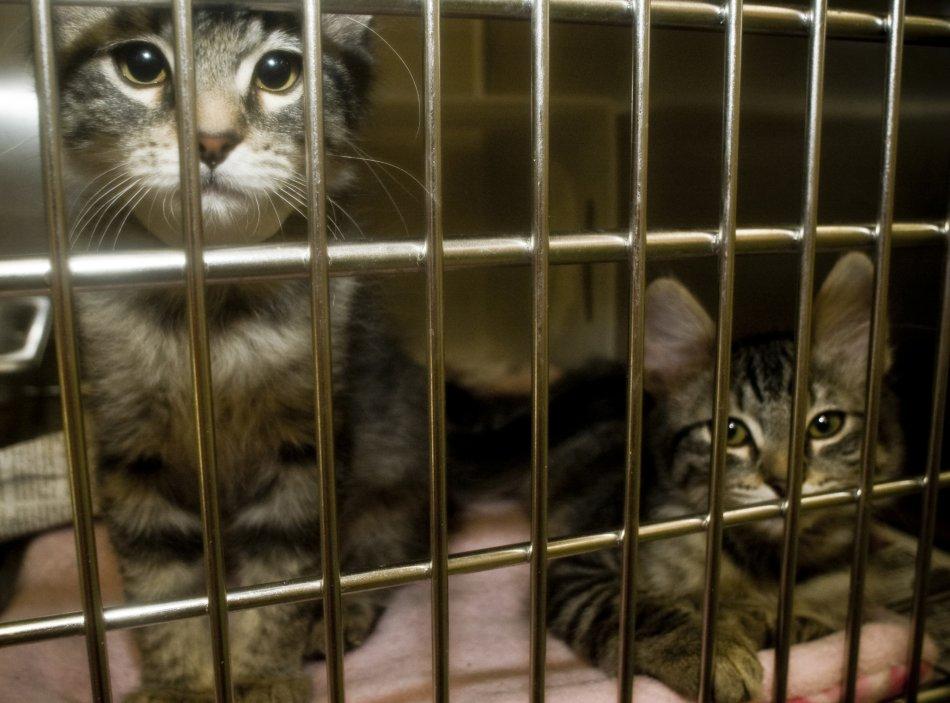 Кошки в клетке фото
