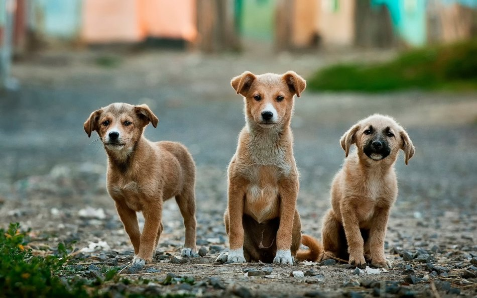 Три щенка на улице фото