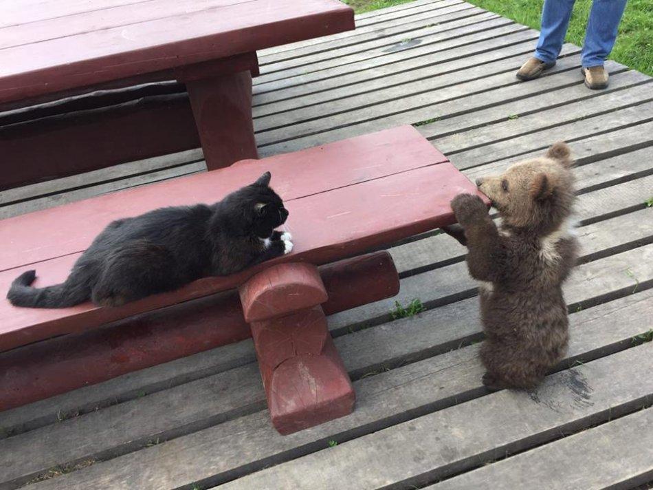Медвежонок и кот фото