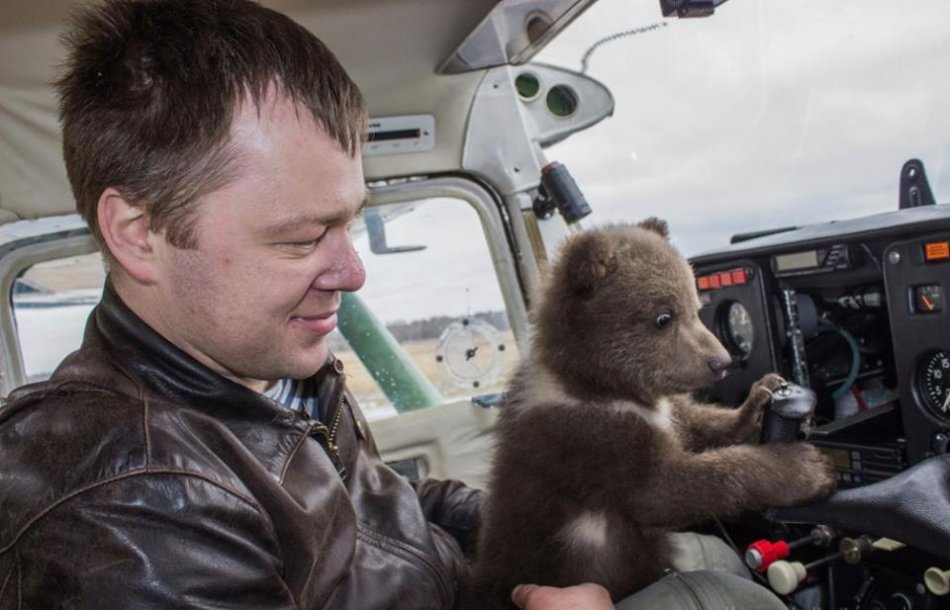 Медвежонок в самолете фото