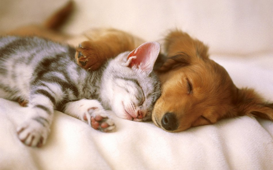 Котенок и щенок фото