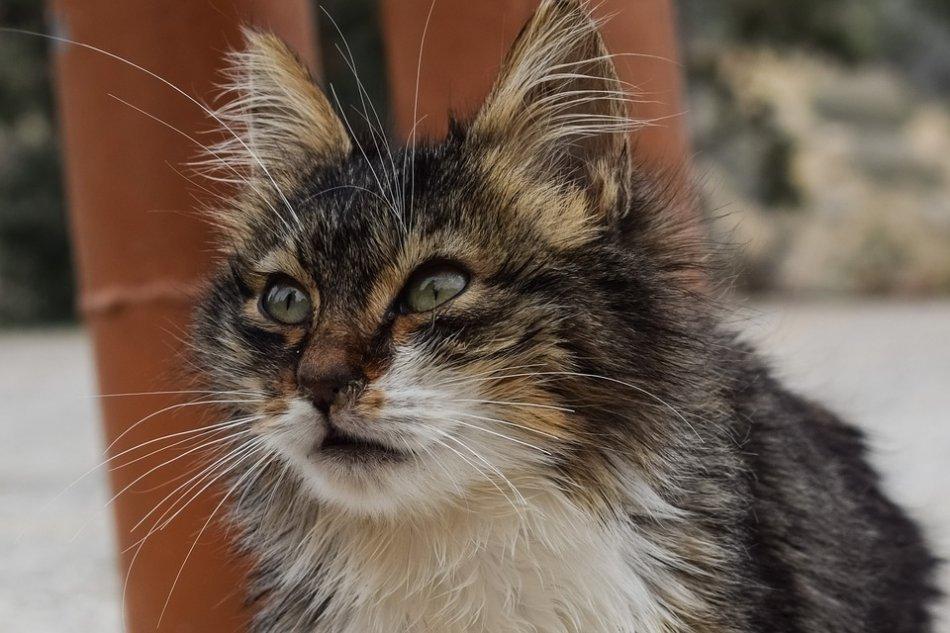 Бездомная кошка фото