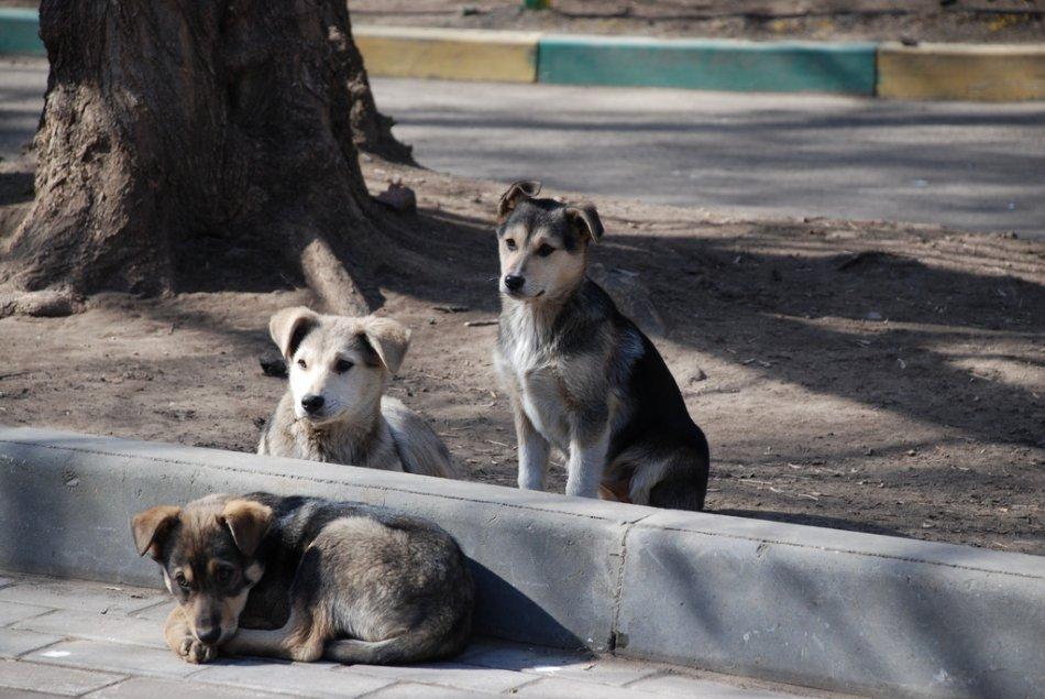 Бездомные собаки фото