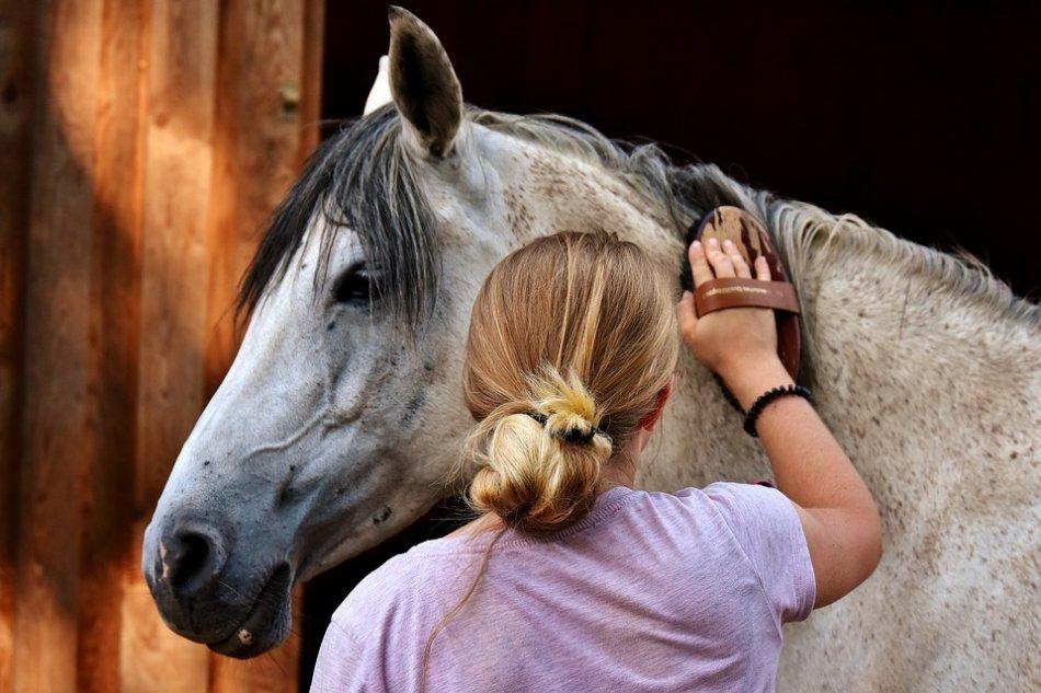 Человек чистит серую лошадь фото