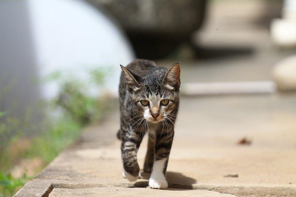 Кошка идет по улице фото