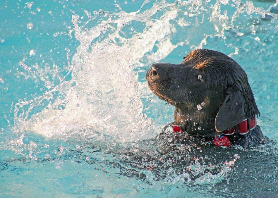 Собака плавает фото