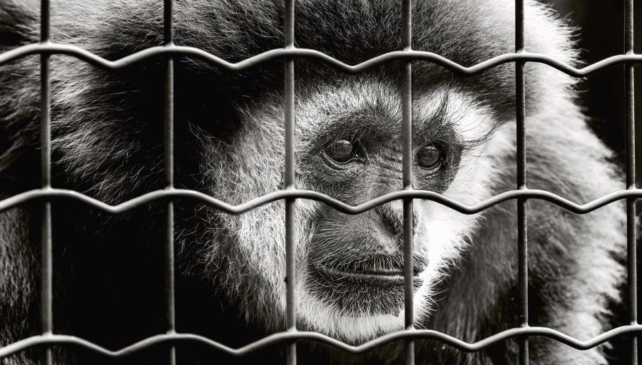 Обезьянка в клетке фото