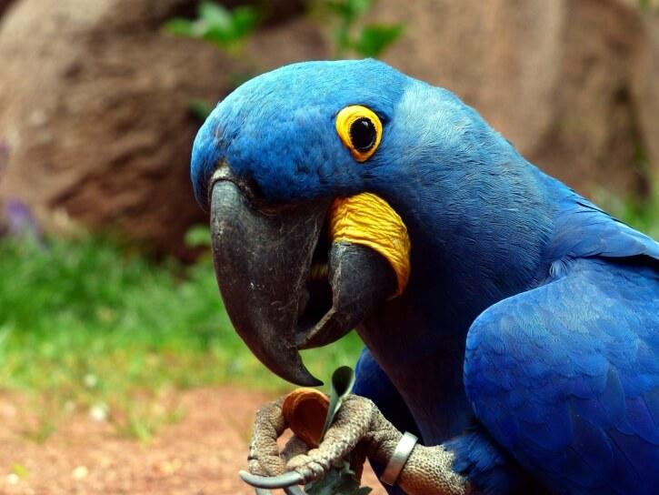 попугай,птица,домашнее животное