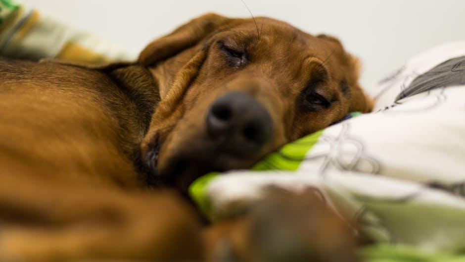 собака спит на кровати фото
