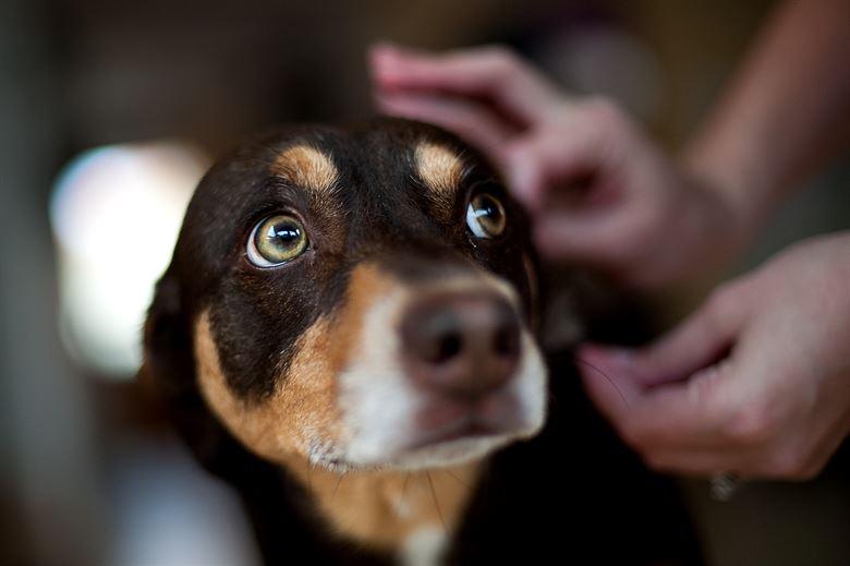 Собака боится фото
