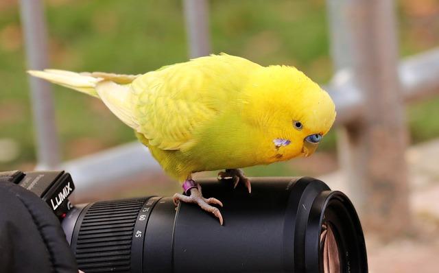 Попугай сидит на фотоаппарате