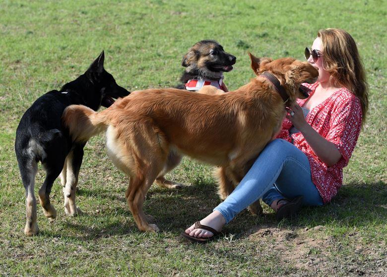 Собаки встречают хозяйку фото