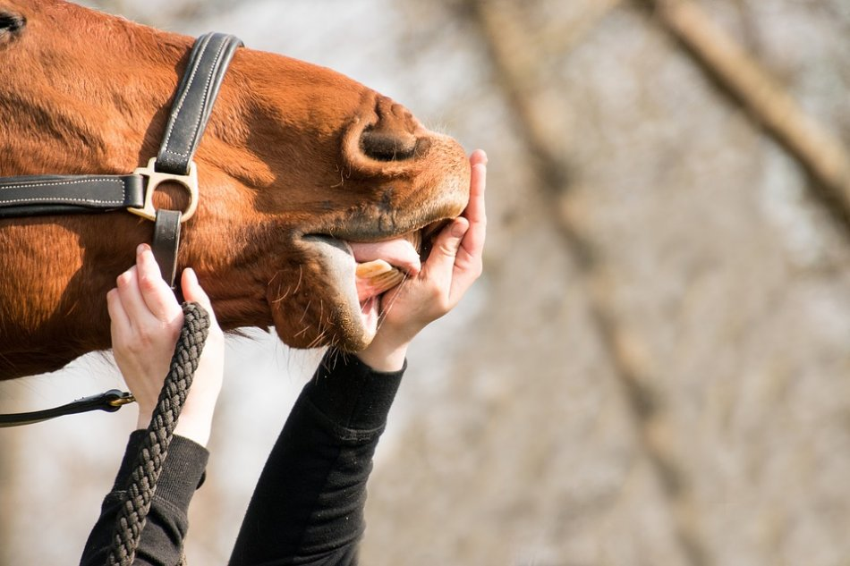 Человек и лошадь фото