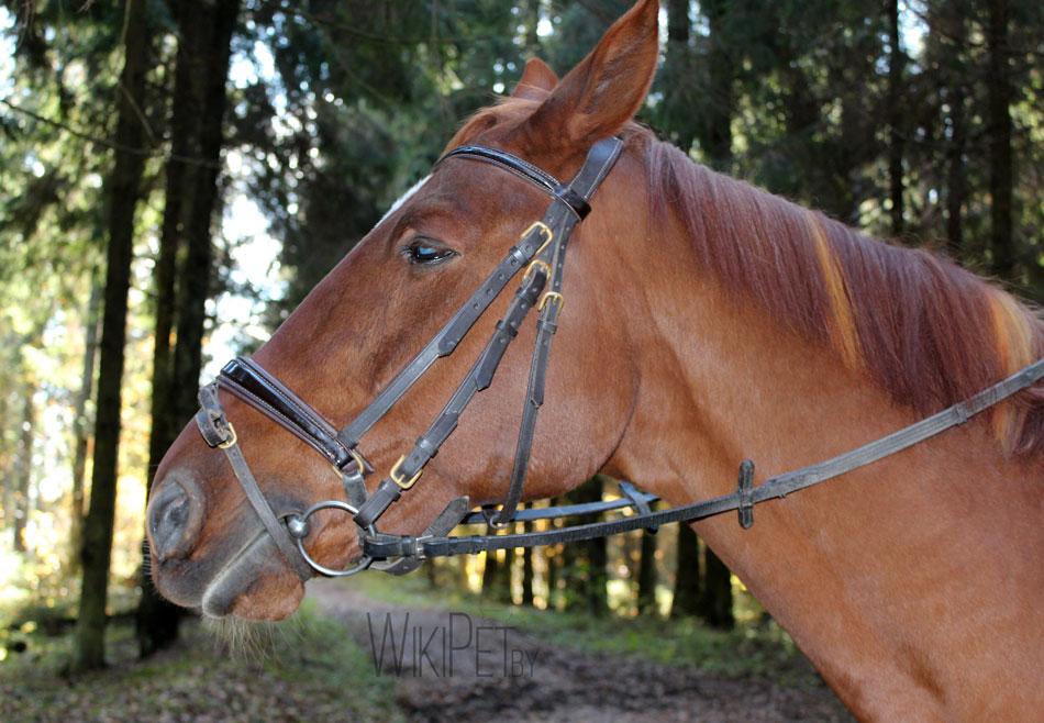 голова лошади фото