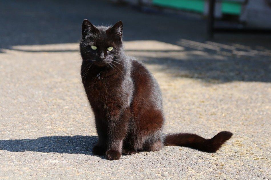 Черная кошка сидит на асфальте фото