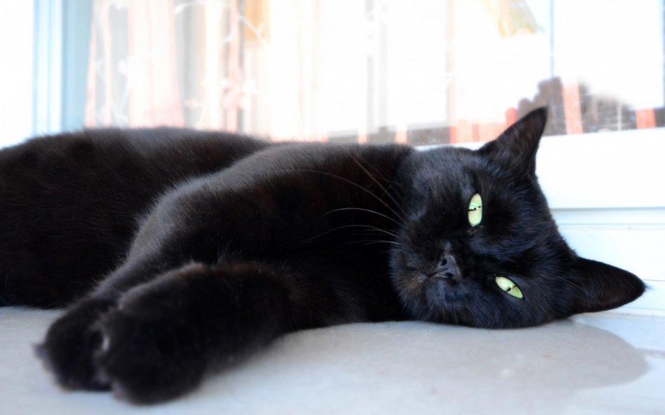 Черная кошка фото