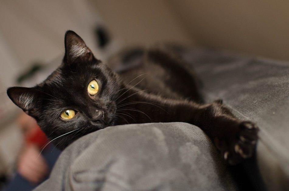 Черная кошка лежит на диване фото