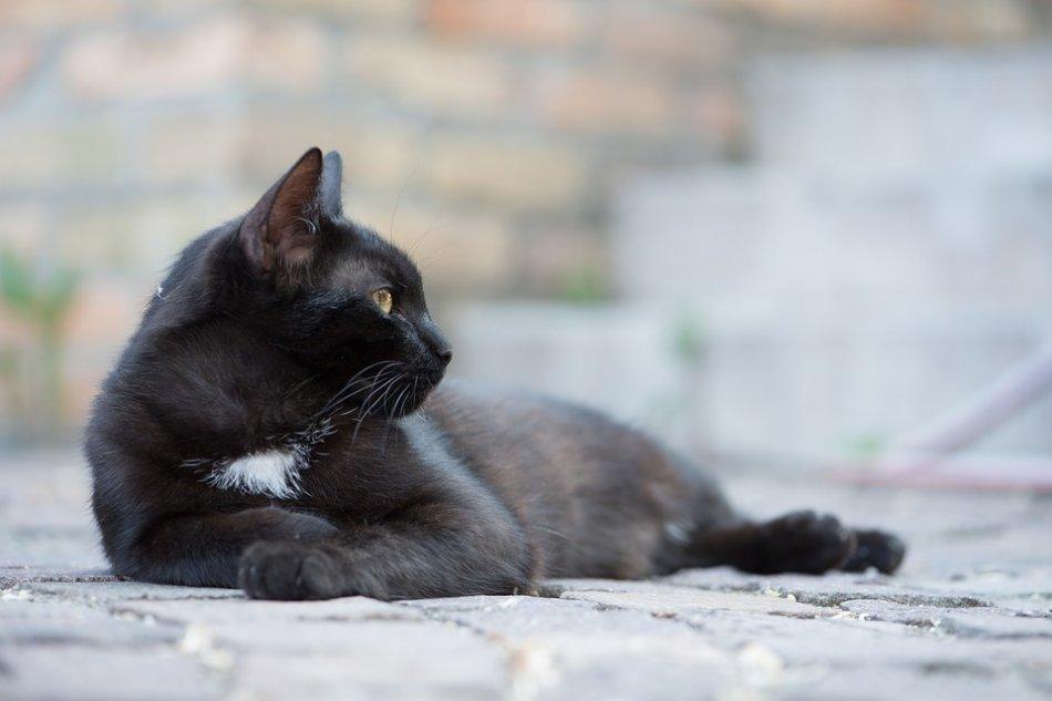 Черная кошка лежит на улице фото