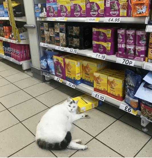 кот,кошка,магазин