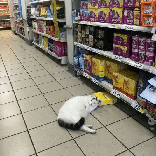 кот,кошка,домашнее животное