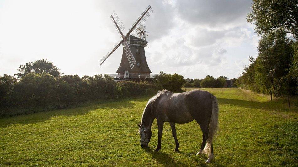 лошадь на фоне мельницы