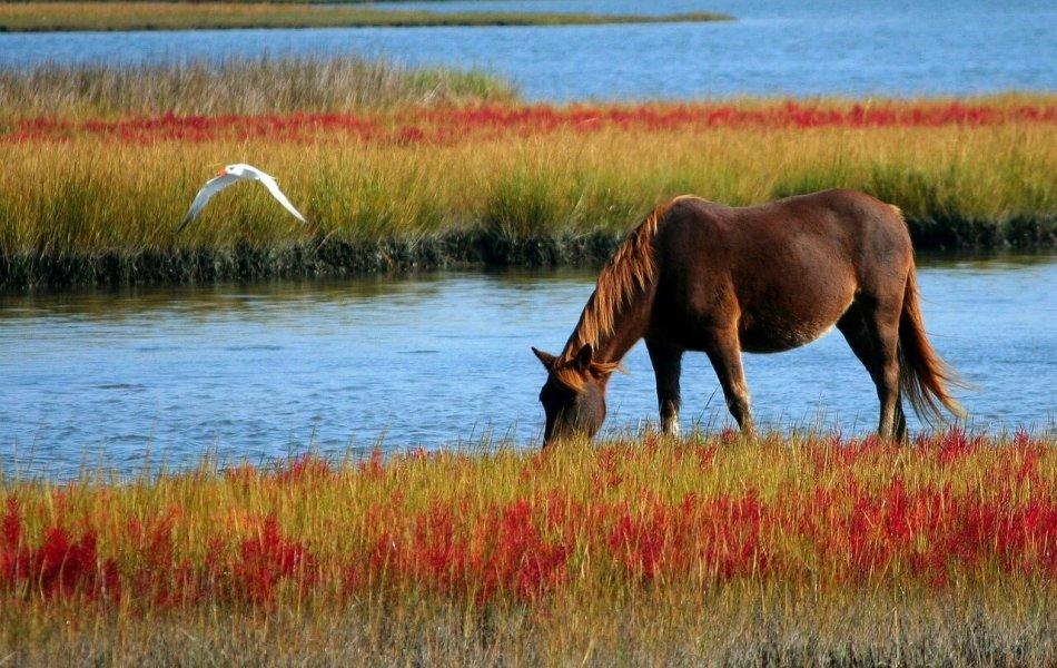 Лошадь щиплет травку на берегу