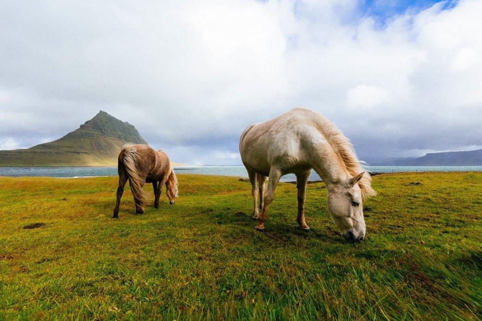 две лошади красивое фото