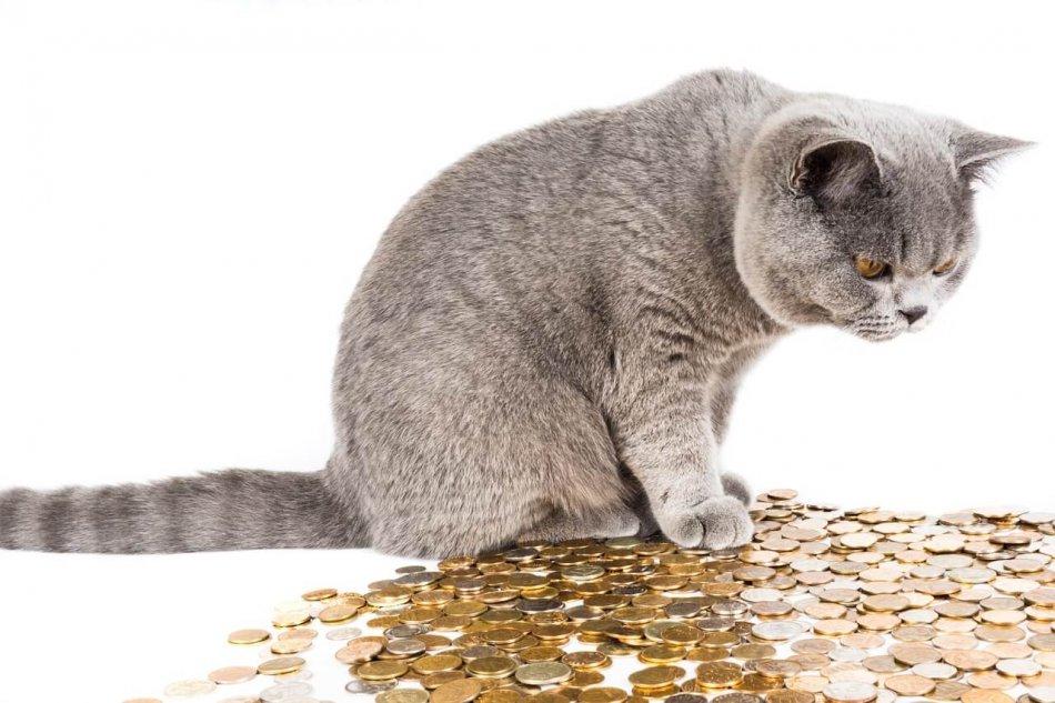 кот и монеты