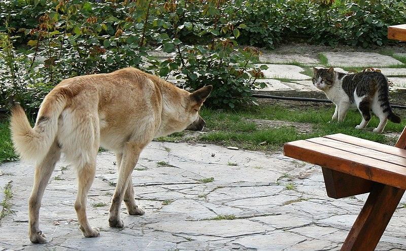 Собака подкрадывается к кошке фото