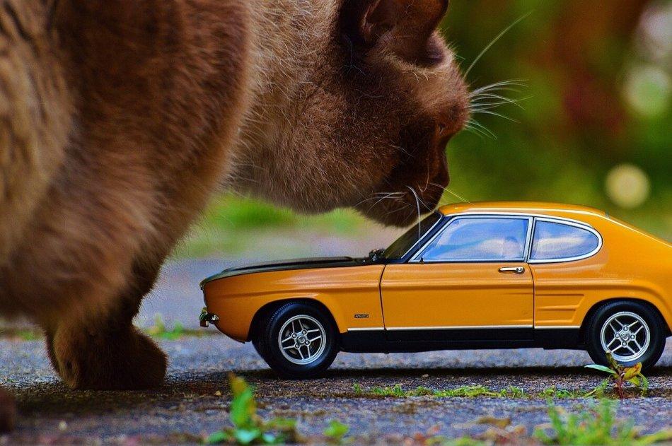 кот и форд