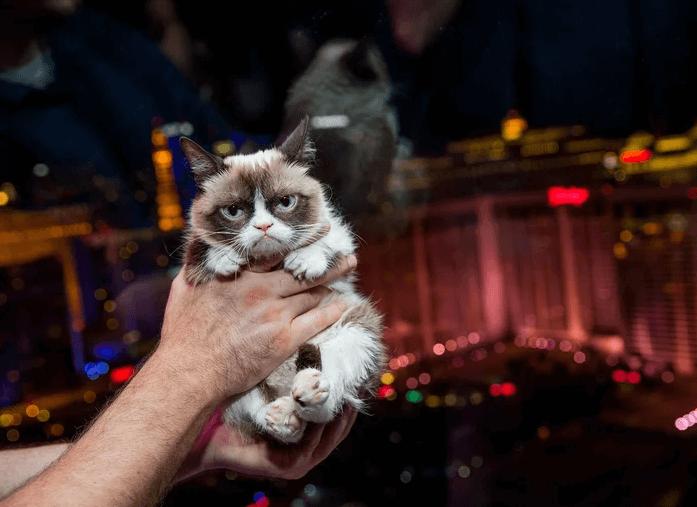 кот,кошка,метис,богатые животные