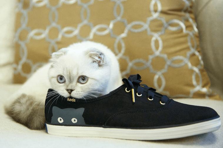 кот,кошка,домашнее животное, вислоухая,богатые животные