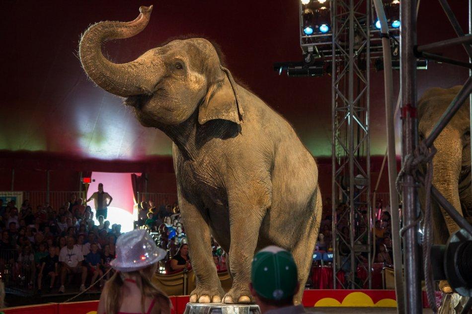 Слон в цирке фото