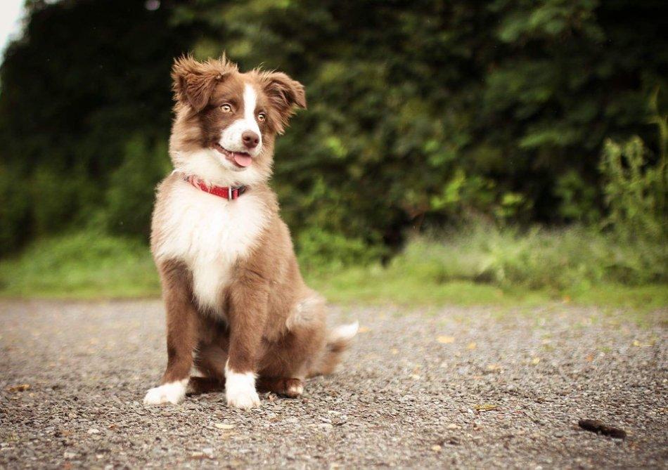 Собака сидит на лесной дороге фото