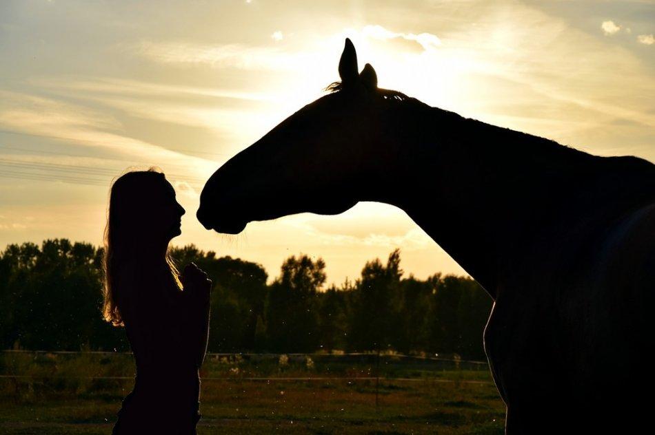 Человек и лошадь на закате фото