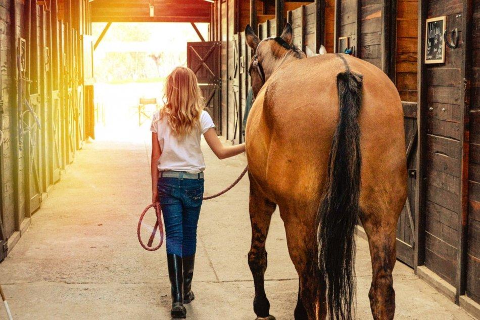 Девочка ведет лошадь в конюшне фото