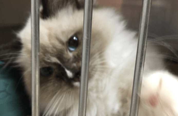 кот,кошка,домашнее животное, приют