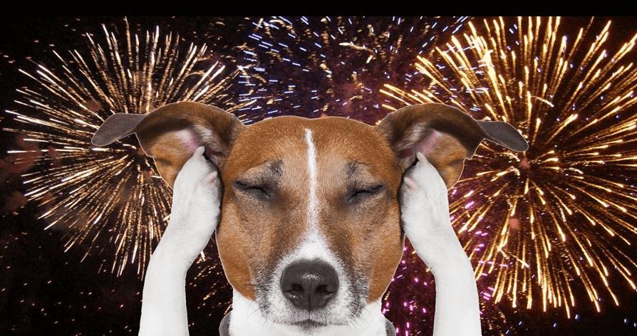 Семинар: Шумовые фобии у собак